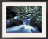 Waterfall in Rainforest, Lamington National Park, Queensland, Australia Posters by Jurgen Freund