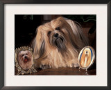 Lhasa Apso with Framed Pictures of Other Lhasa Apsos Prints by Adriano Bacchella