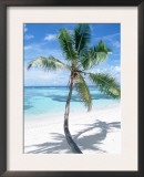 Beach with Coconut Palm (Cocos Nucifera) La Digue, Seychelles Art by  Reinhard