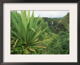 Agave Plant with Opeka Falls in the Background, Kauai, Hawaii Print by Rolf Nussbaumer