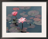 Midnight' Water Lilies, Germany Prints by Petra Wegner
