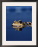 Common Frog (Rana Temporaria) Resting at Surface Print by Jane Burton