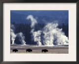 Landscape with Bison and Steam from Geysers, Yellowstone National Park, Wyoming Us Prints by Pete Cairns