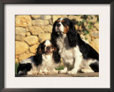 King Charles Cavalier Spaniel Adult with Puppy Poster by Adriano Bacchella