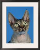 Head of Devon Rex Cat Prints by Petra Wegner
