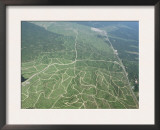 Newly Planted Oil Palm, Plantations, Lowland Dipterocarp Rainforest, Sabah, Borneo, Malaysia Prints by James Aldred