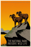 National Parks Preserve Wild Life Masterprint
