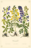 Monkshood Flowers Masterprint