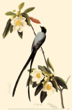 Fork-Tailed Flycatcher Masterprint