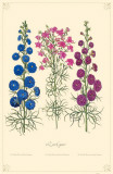 Larkspur Flowers Masterprint