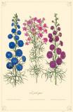 Larkspur Flowers Masterprint
