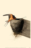 Barn Swallow Masterprint