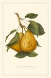 Pear Masterprint