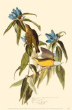 Connecticut Warbler Reproduction image originale
