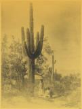 Gathering Saguaro Fruit Masterprint