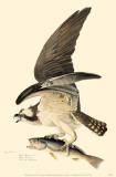 Osprey Masterprint