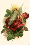 Fairy on Rose Masterdruck