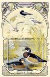 Water Fowl Masterprint