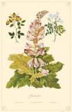 Jasmines Flowers Masterprint
