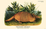 Nine-Banded Armadillo Masterprint