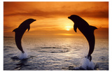 Dolphins Sunset Masterprint