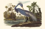Tri-Colored Heron Masterprint