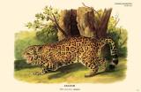 Jaguar Masterprint