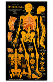 Osteology Masterprint