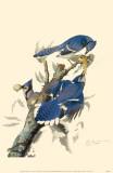Geai bleu Reproduction image originale