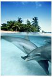Bottlenose Dolphins Masterprint