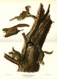 Flying Squirrel Masterprint