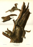 Flying Squirrel Masterprint