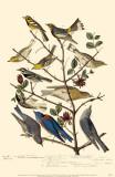 Townsend's Warbler's Masterprint