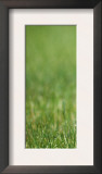 Yorkshire Terrier Puppy Sitting in Grass Prints by Adriano Bacchella