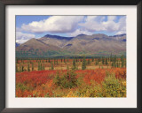 Tundra Landscape in Autumn, Denali National Park, Alaska USA Posters by Lynn M. Stone