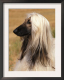 Afghan Hound Profile Prints by Adriano Bacchella