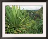 Agave Plant with Opeka Falls in the Background, Kauai, Hawaii Posters by Rolf Nussbaumer