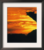 Grey Wolf, Howling at Sunset Prints by Kim Taylor