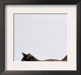 Domestic Cat, One-Year Dark Tortoiseshell Shorthair Cat Prints by Jane Burton