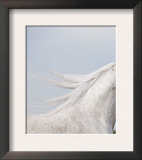 Grey Arab Stallion, Ojai, California, USA Posters by Carol Walker