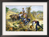American Farm Family Gathering Pumpkins and Husking Maize, c.1800 Prints