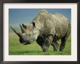 Black Rhino Portrait, Ngorongoro Nr, Tanzania Poster by Staffan Widstrand