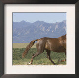 Oldenburg Horse Trotting, Colorado, USA Prints by Carol Walker