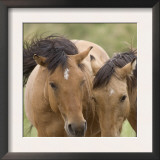 Mustang / Wild Horse Mare and Stallion Bothered by Flies in Summer, Montana, USA Pryor Art by Carol Walker