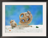 Gerbil at Play Prints by  Steimer