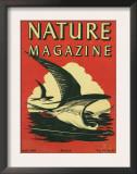 Nature Magazine - View of Sea Gulls Grazing the Water, c.1948 Prints