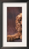 English Cocker Spaniel Lying Down with Head Tilted to One Side Posters by Adriano Bacchella