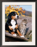 Entlebuch Mountain Dog and Domestic Cat Poster by  Reinhard