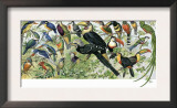 Quetzal, Toucans, and Other Tropical Birds Prints