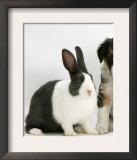 Tricolour Border Collie Puppy with Blue Dutch Rabbit Posters by Jane Burton